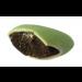 Notre dragée mini coeur Vert - chocolat